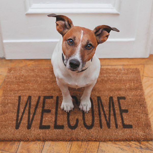 3D Wenskaart Welcome Dog