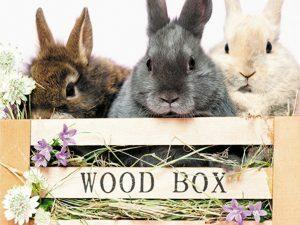 3D Wenskaart Rabbit Wood Box