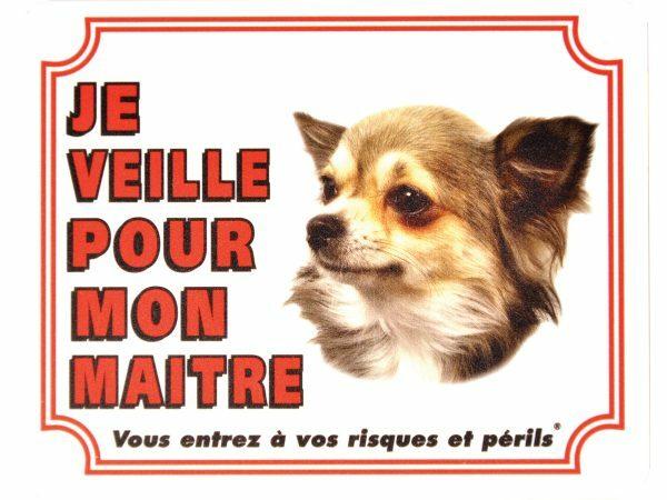 Waakbord S Chihuahua langharig FR