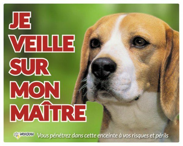 Waakbord foto hond Beagle FR