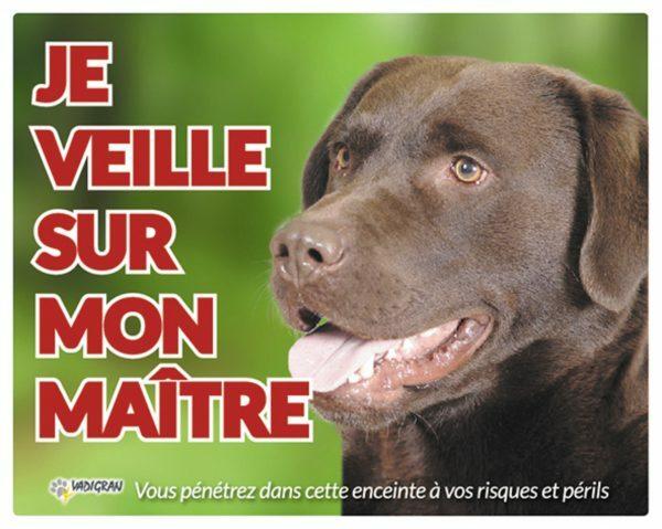 Waakbord foto hond Labrador Bruin FR