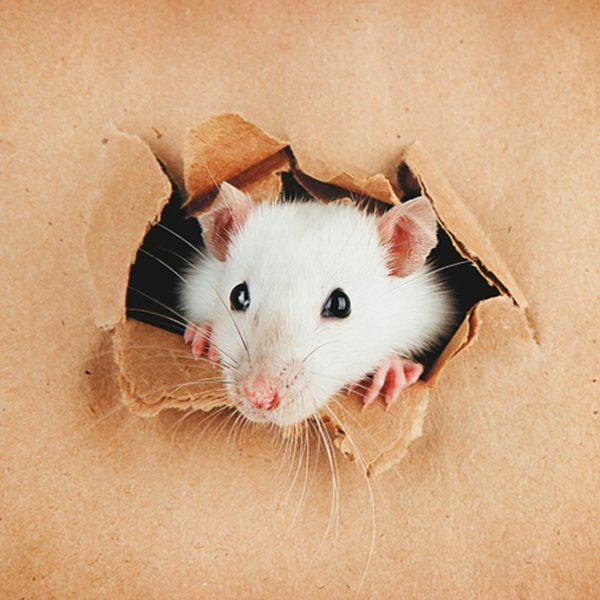 3D Wenskaart Curious Mouse