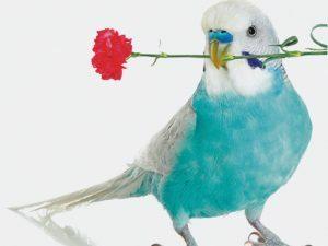 3D Wenskaart Flower Bird