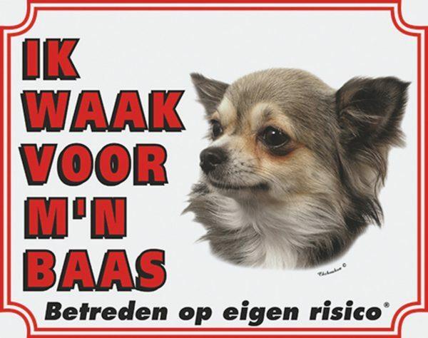 Wit waakbord Chihuahua Langharig NL