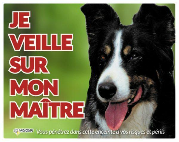 Waakbord foto hond Border Collie FR