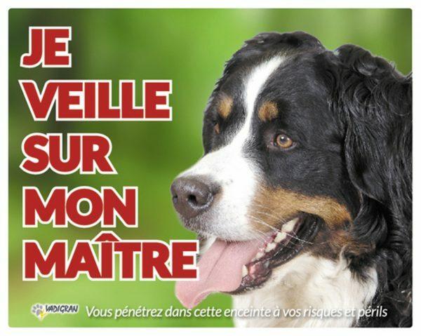 Waakbord foto hond Berner Sennen FR