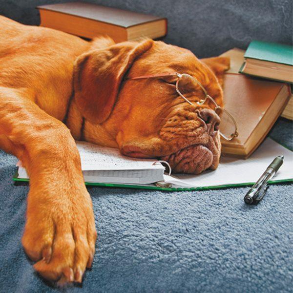 3D Wenskaart Sleeping dog