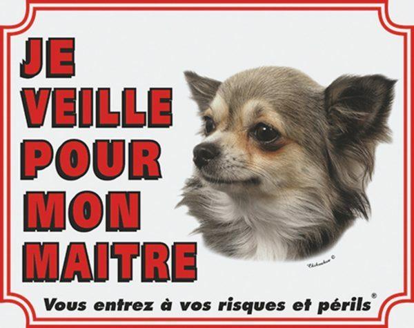 Wit waakbord Chihuahua Langharig FR