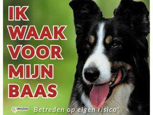Waakbord foto hond Border Collie NL