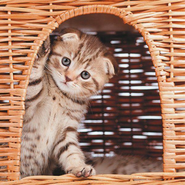 3D Wenskaart Kitty House