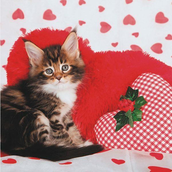 3D Wenskaart Lovely Kitty