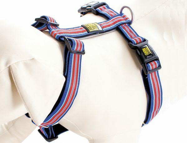 HR XS Hampton Strip Blue nek 24-39cm borst 32-40cm