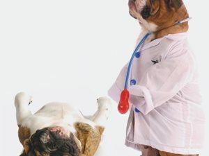 3D Wenskaart Doctor Dog