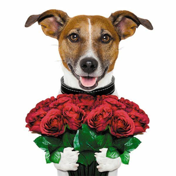 3D Wenskaart Lovely Dog