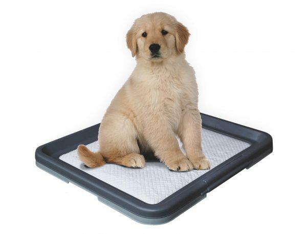 Doggy Training Start Kit 62,5 x 48cm + 1 mat