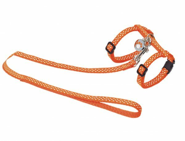 Harnas&leiband kat stip.10mm30/35cm 120cm oranje