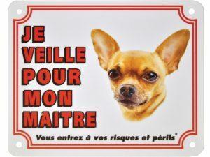 Waakbord S Chihuahua kortharig FR