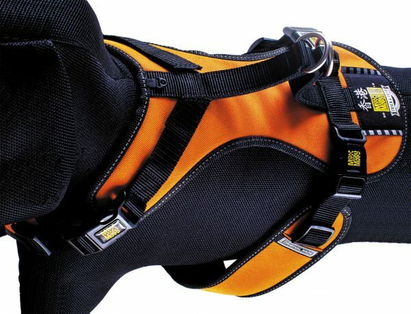 HR matrix Splash Orange nek39-43cm borst46-60cm