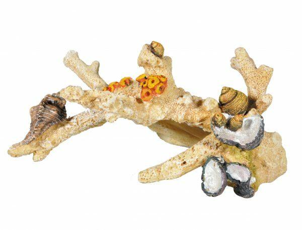 Aqua Deco versteend koraal 2 195x105x95mm