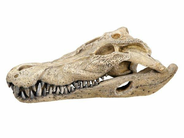 Aqua Deco Krokodil schedel 260x140x90mm
