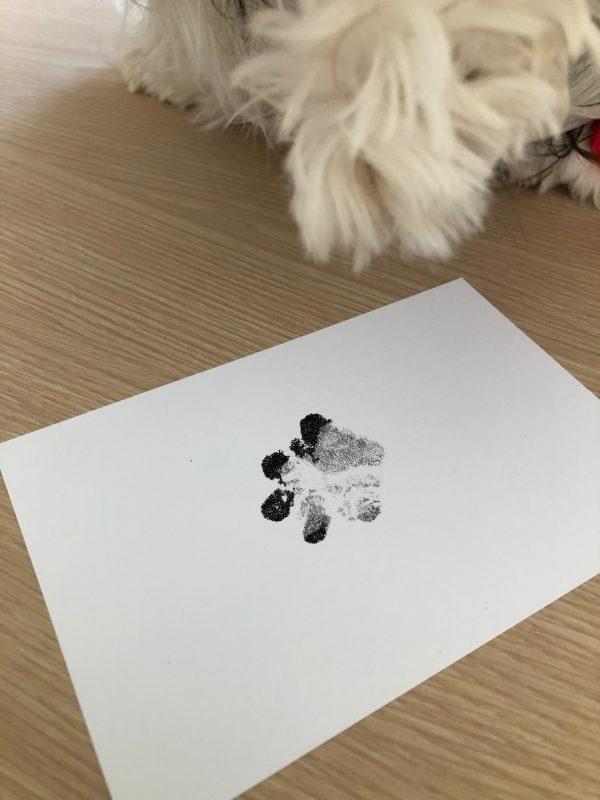 Afdruk hondenpoot