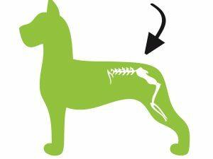 Dog Flex
