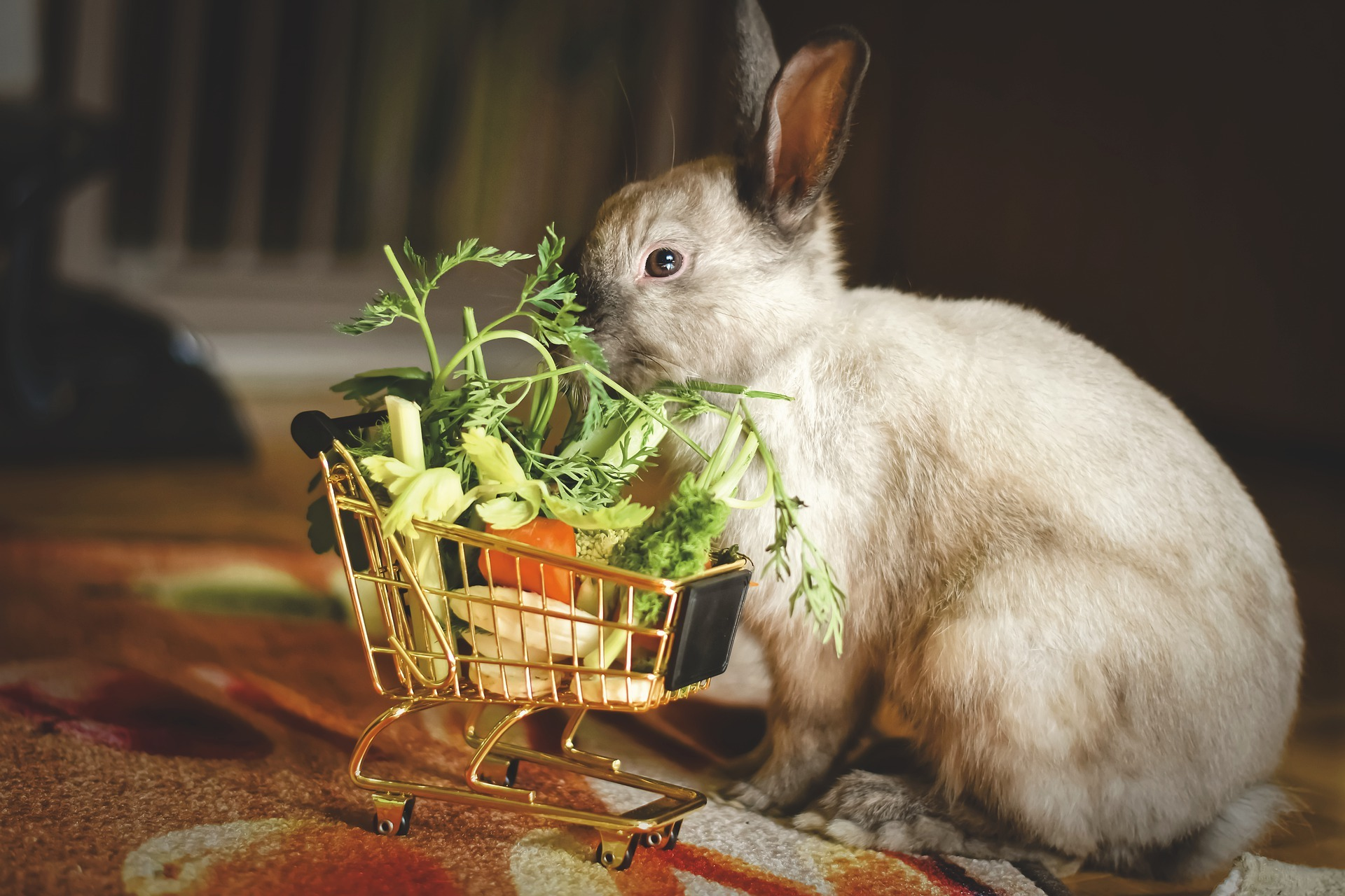 Gebitsproblemen bij konijnen herkennen