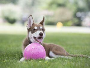 Speelbal voor honden