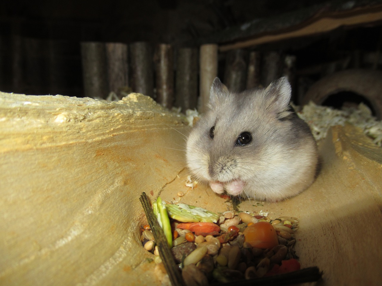 alles voor hamster - hamsterscaping
