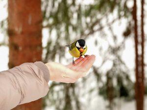 Voeding tuinvogels